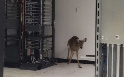 A Deer Breaks into a North American Datacenter